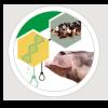 A importância da preservação do porco Malhado de Alcobaça